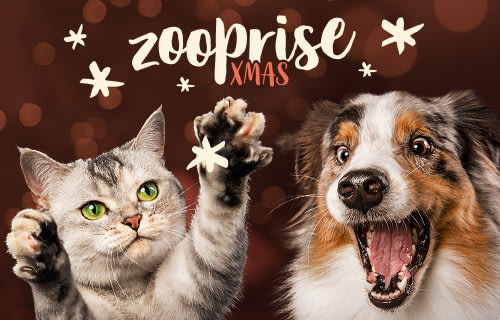 DE zooprise xmas general background banner
