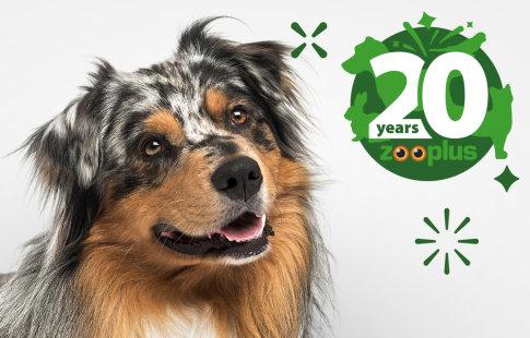 Gratis Snack Wir Feiern 20 Jahre Zooplus