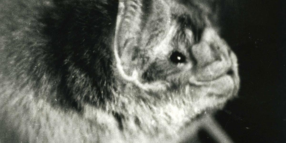 The Nonhuman Cinema of Jean Painlev/é Zoological Surrealism