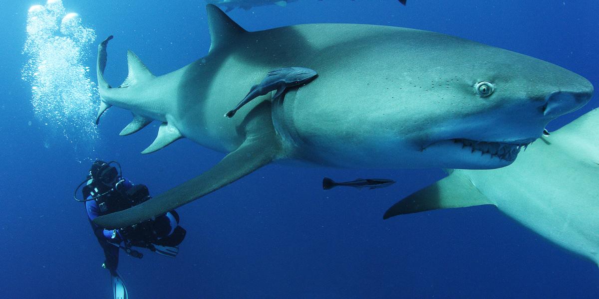 sharkwaterextinction_03.jpg