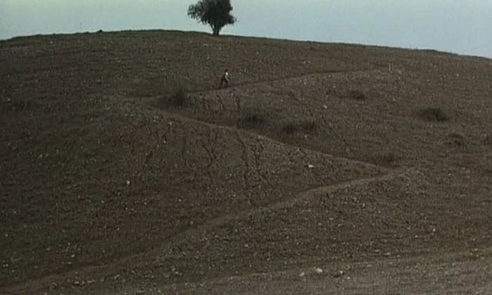 Hugh Review - Kiarostami Tree