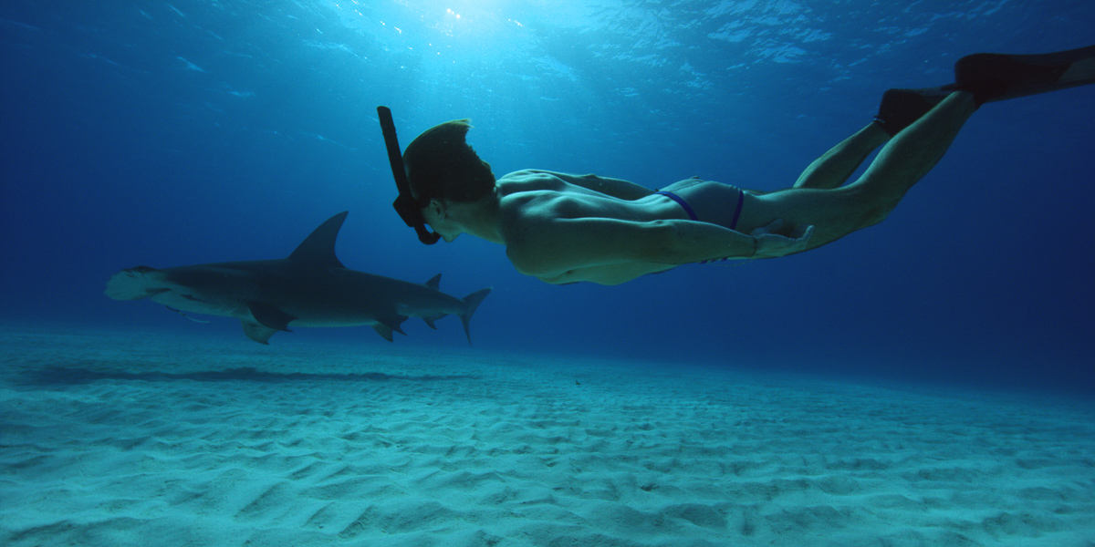 sharkwaterextinction_05.jpg