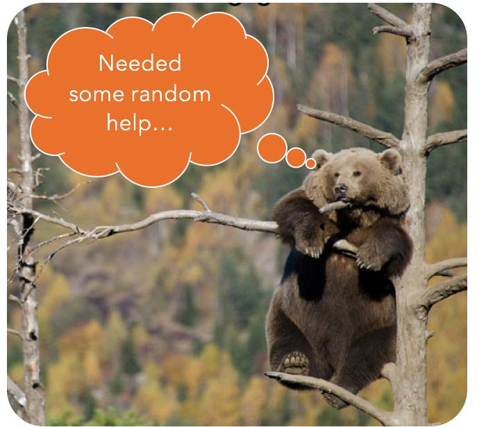 Random Forest Bear
