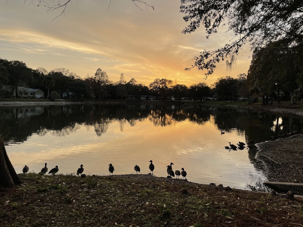 A small lake at sunset, with bird silhouttes. This photo contains Exif metadata - see if you can find the speed at which the photographer was moving when it was taken!