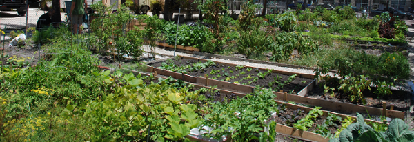 South Beach Miami Community Garden.