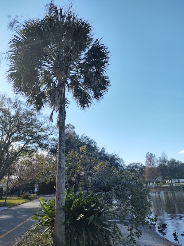 Photo 1 of palm tree beside a road and a small lake. This photo contains Exif metadata - see if you can find where, when, and on what camera it was taken!