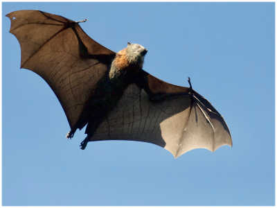 12 Fascinating Things You Never Knew About Bats
