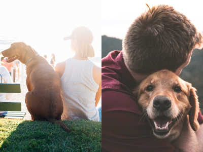 13 Reasons You Should Adopt A Rescue Instead Of Buying A Dog