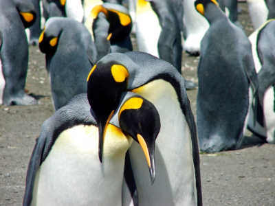 13 Fascinating Facts You Never Knew About Penguins
