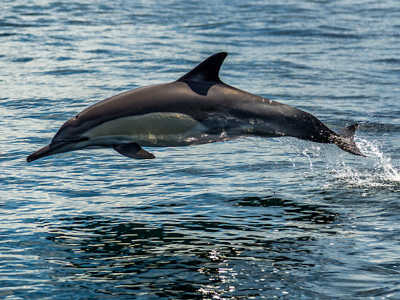 20 Stunning Photos Of Dolphins In The Wild
