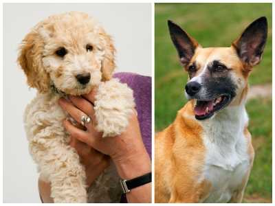19 Mixed-Breed Dogs That Are Absolutely Adorable