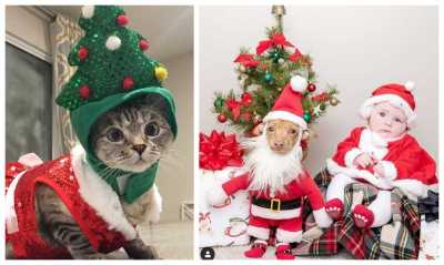 These Pets Are More Excited About The Holidays Than You Are