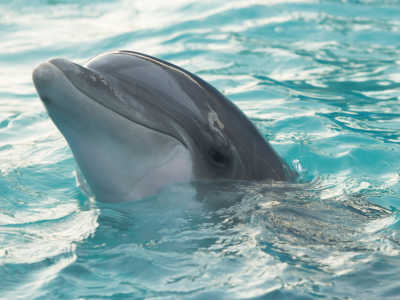 14 Facts You Didn't Know About The Majestic Dolphin