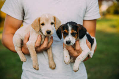 Everything You Should Know Before You Foster A Puppy