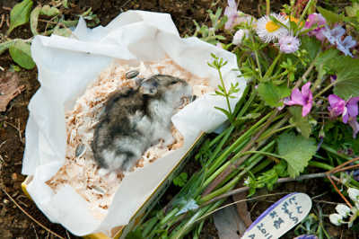 The Death of Alexander Hamster