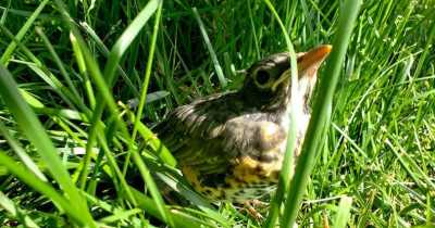 If You Find a Baby Bird, There's One Step You Need to Take Immediately