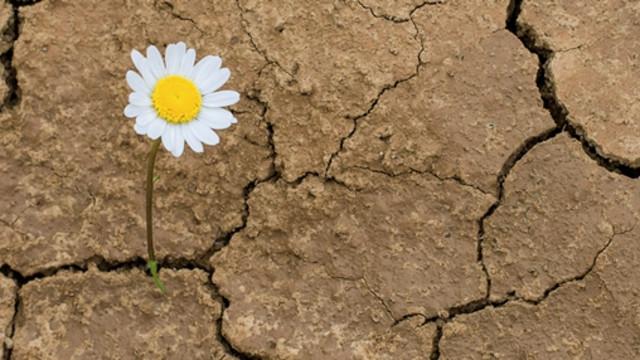 Istock - Resiliency - flower - banner web