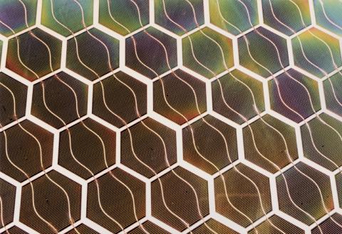 BIMODE - green hexagonal cells foto