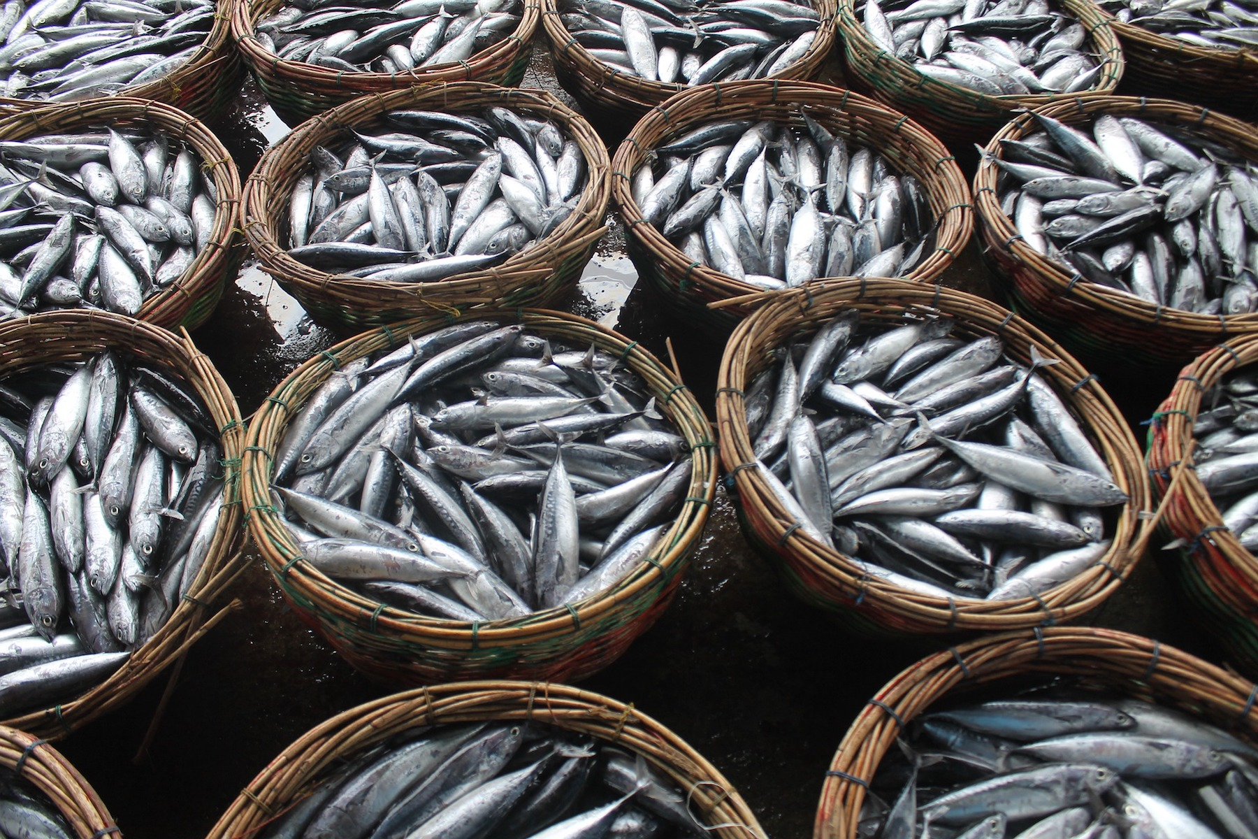 fish-5196682 1920