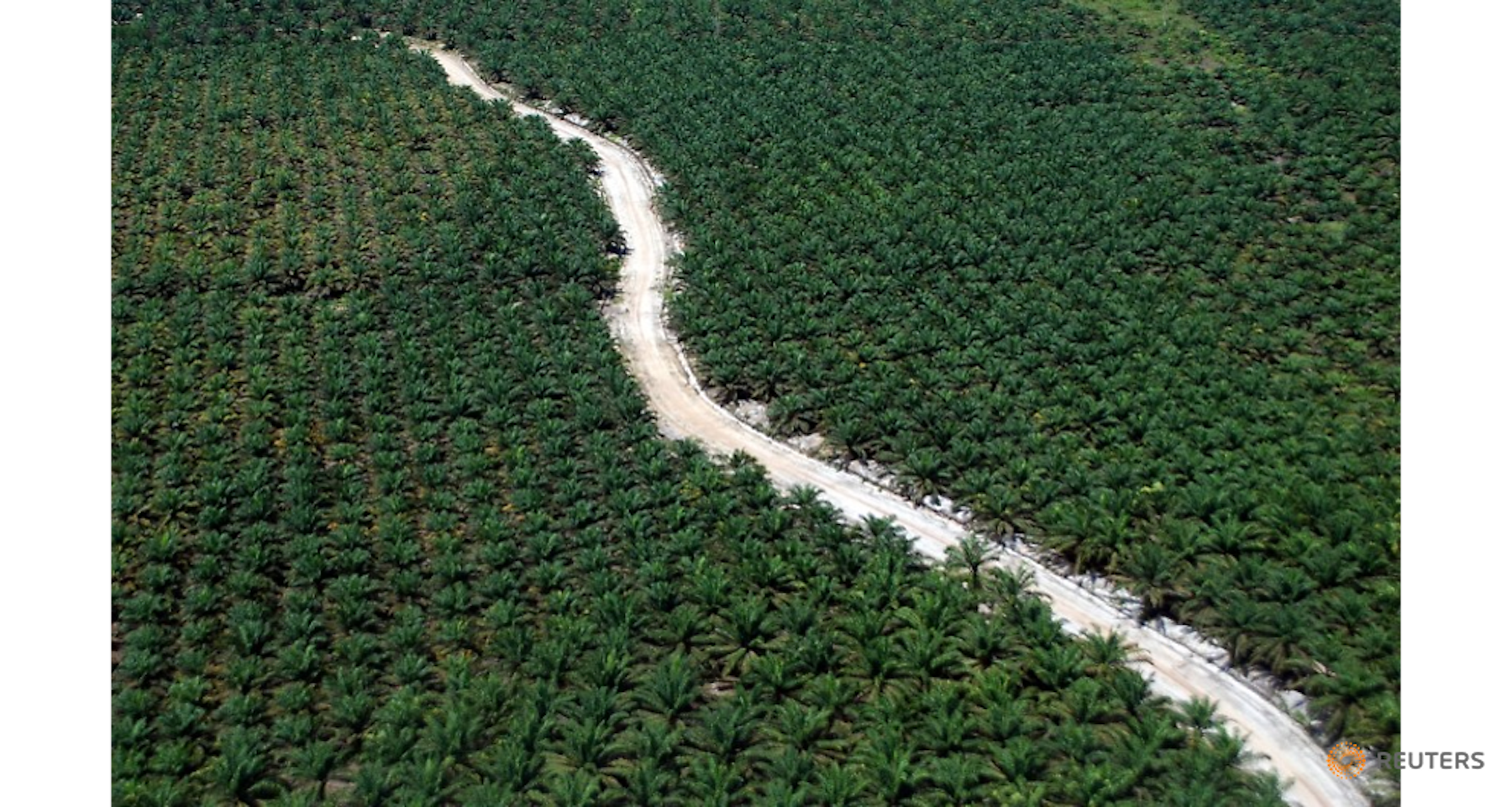 roundtable-on-sustainable-palm-oil-riau-rainforest-plantation