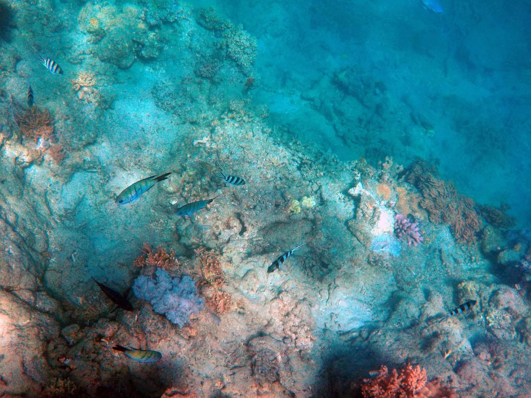 under-the-sea-401520 1920