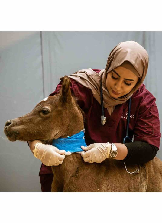 Dr Muneera Al Fadala - Equine Veterinary Medical Center - v - 1