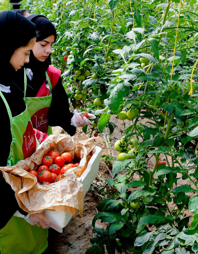 Qatar's community is the key to food security: QF researcher