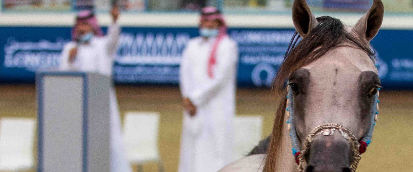 Horses from QF's Al Shaqab hit the auction block