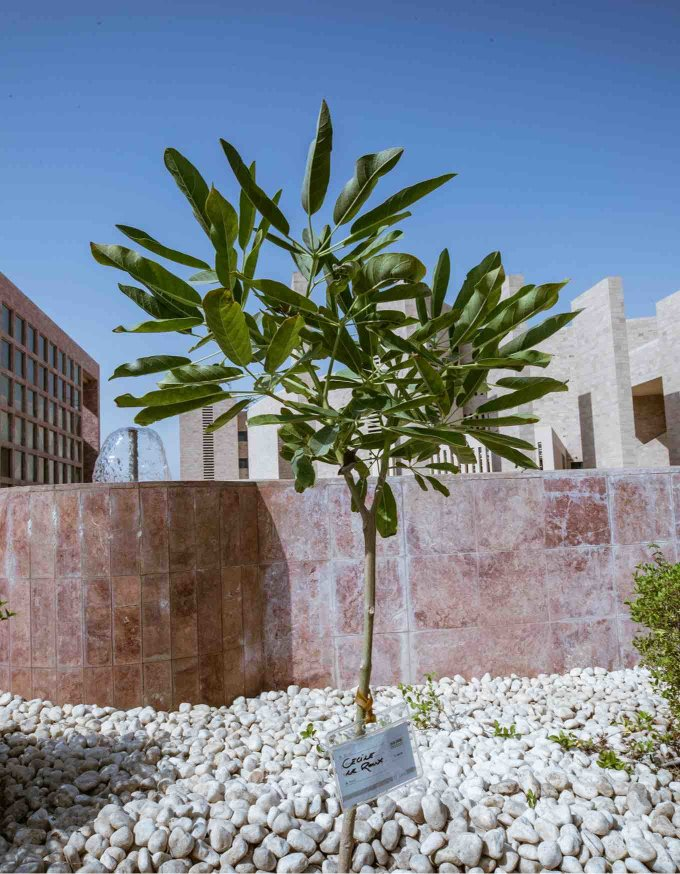How we're aiming to create Qatar's first urban forest