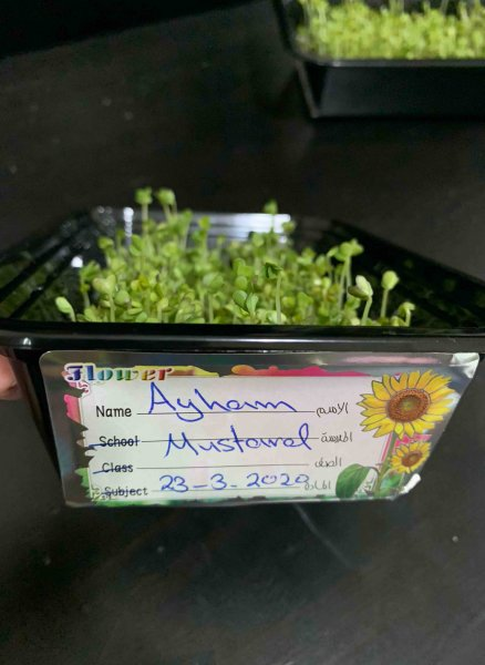 QAK Microgreens Remote Learning Project Ayham Microgreens - v - 2