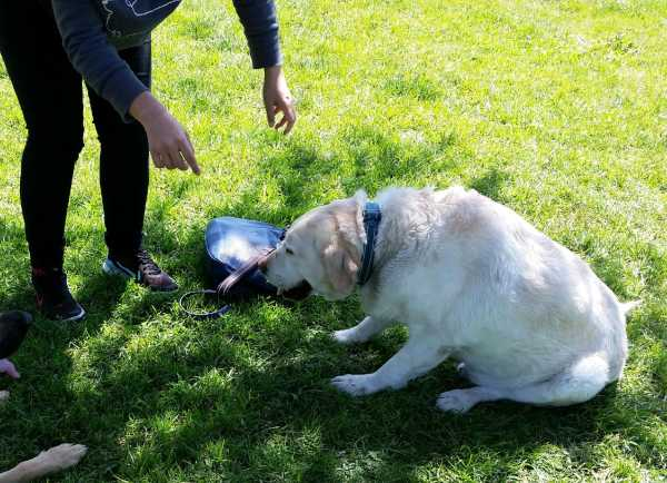 The Canine Obesity Epedimic Tips To Keep Your Dog From Falling Victim To Obesity