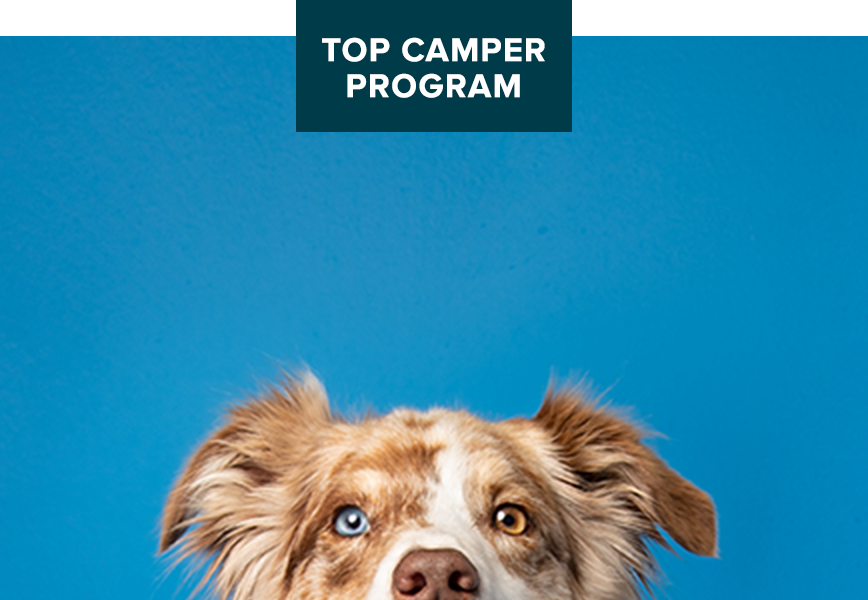day camp top camper program buy 10 get 1 free