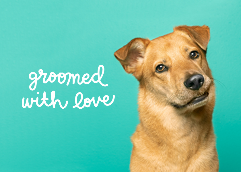 Meet Pets We Groomed with Love