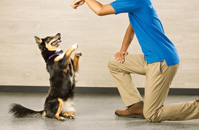 Petsmart Services