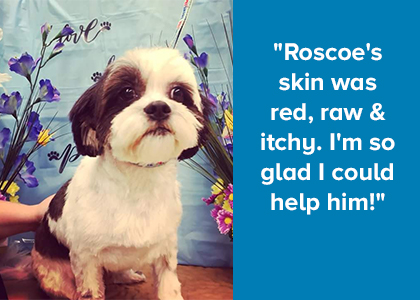 Roscoe Grooming Story