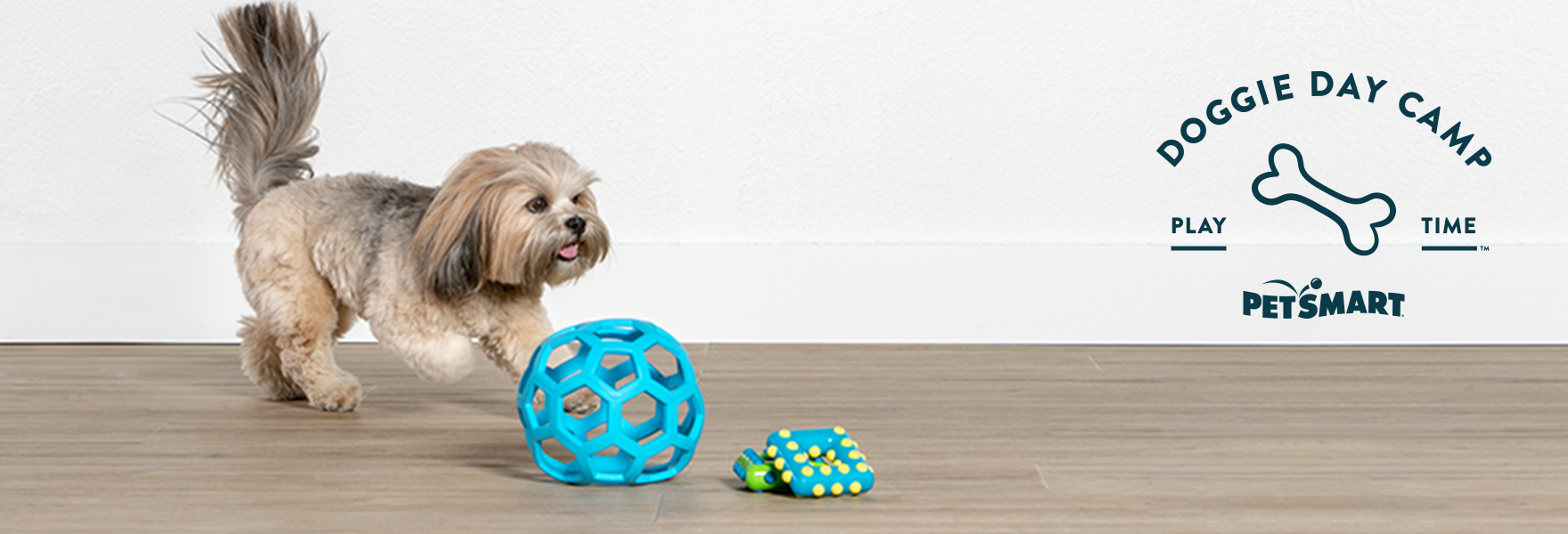dog play with toys