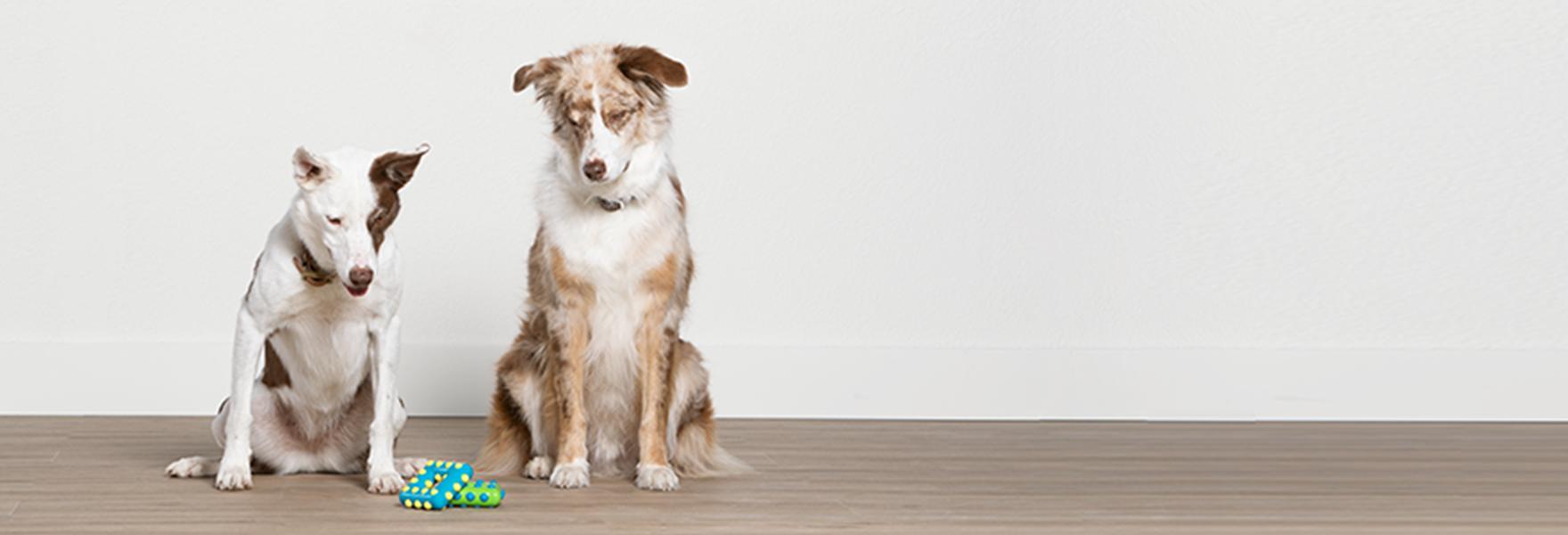 Dog Training: Puppy and Adult Dog Training Classes | PetSmart