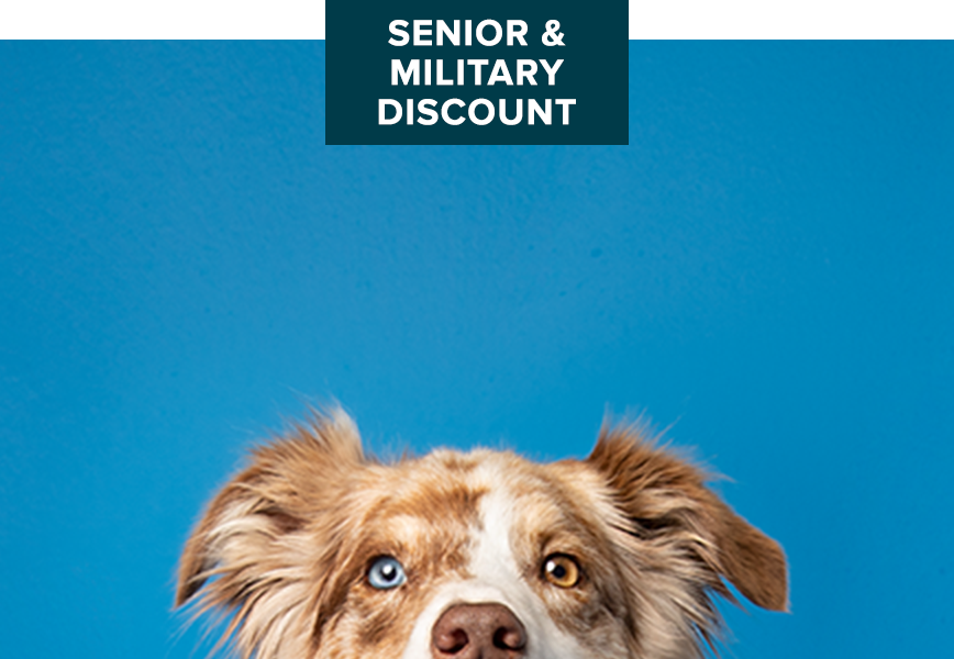 PetsHotel Senior & Military Discount