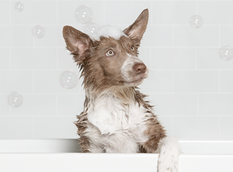 dog in bath tub with bubbles