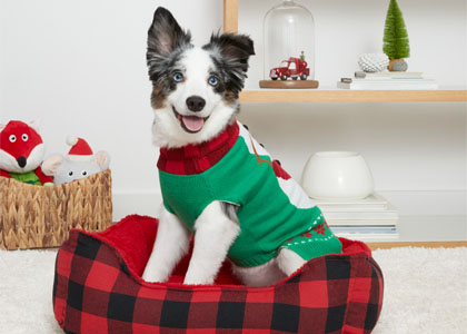 PetsHotel Holiday Image