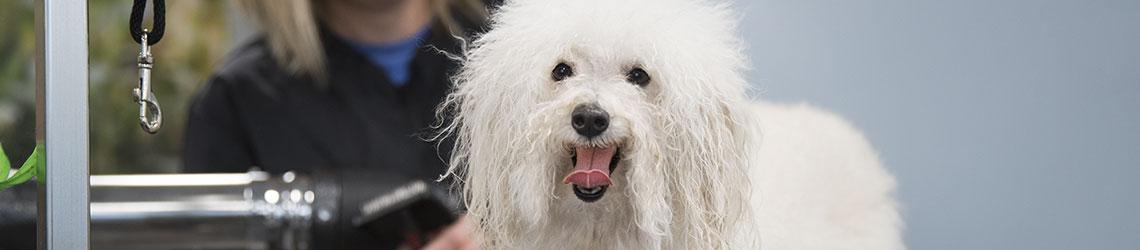 Pet Boarding Training Grooming Specials Discounts Petsmart