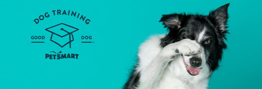 Dog Training Paw Over Face With Teal Background