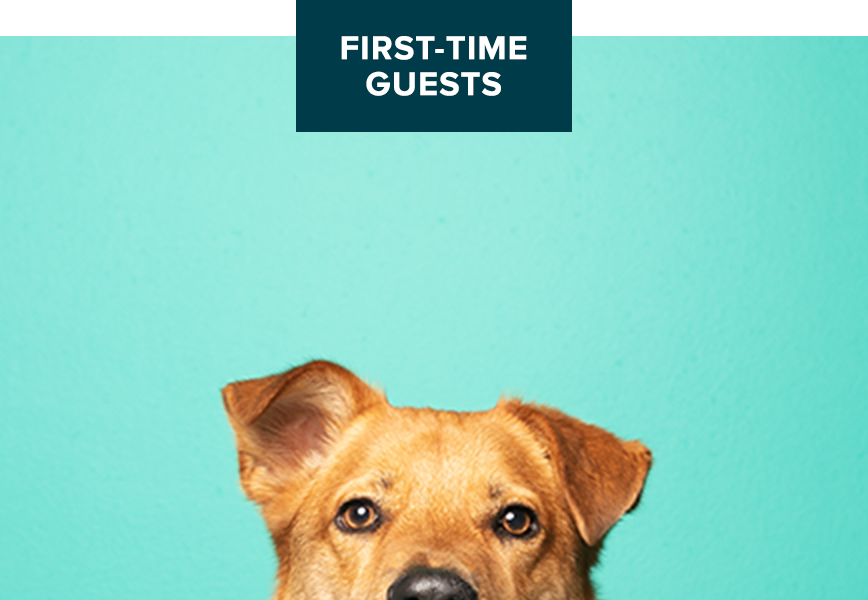 PetsHotel First-Time Guests Buy 1 Night Get Night Free