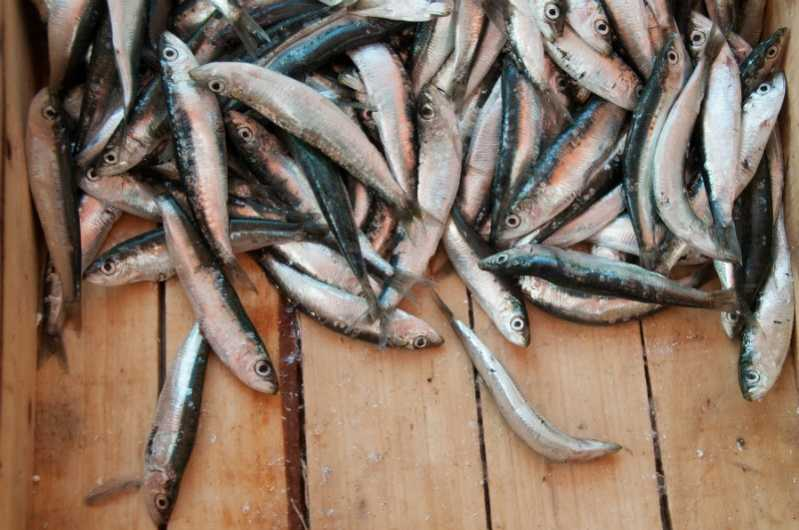 Cosa serve per preparare il garum? Interiora di pesce – di solito alici – macerate nel sale. Fonte: RGallianos / Shutterstock. \[…\]