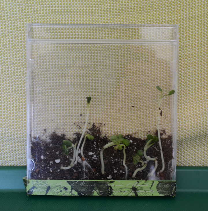 nature school project - up-cycled seed sprouting