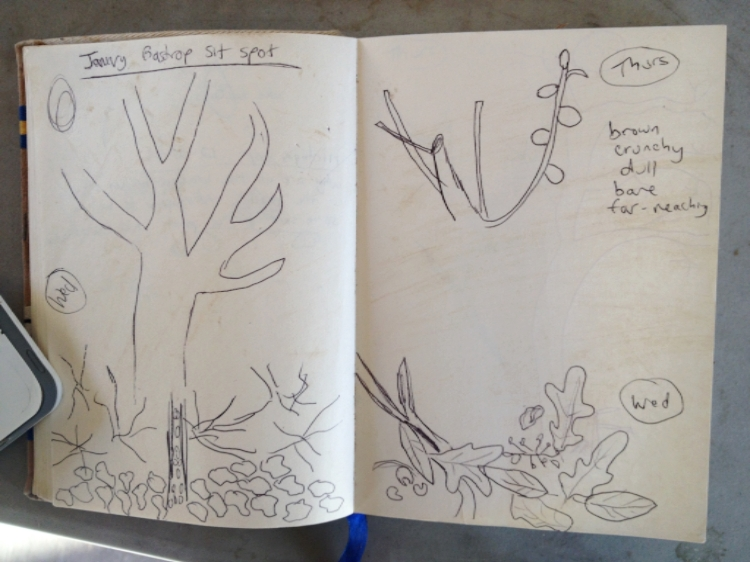 nature journal 4