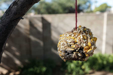 Nature School Project: Bird Feeders and Squirrel Feeders