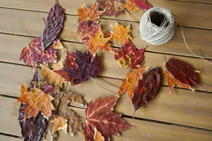 blog-nature school project waxed leaf banner-800 -532-128KB-jpg