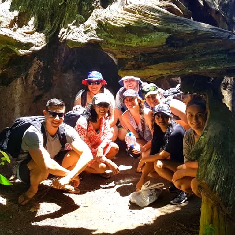 Backpackers hiding under a Kauri stump in the Waitakere Ranges