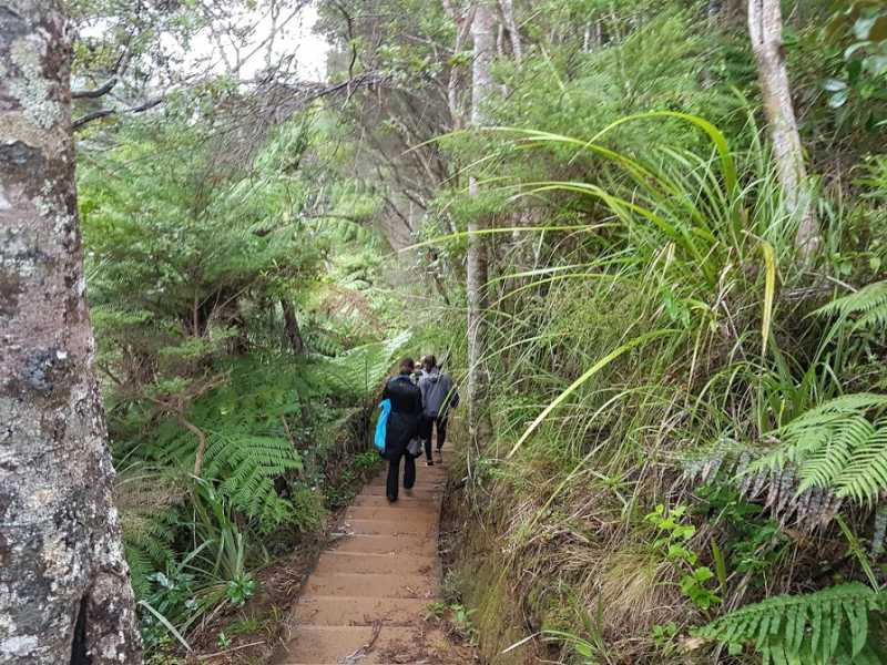 Tour group explores Auckland's beautiful Waitakere Ranges